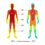 Comparison graphic of the temperature of the body core and the body shell under the influence of the ambient temperature.